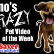 Dino's Crazy Pet Videos