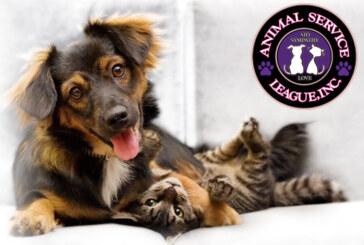 Animal Service League Pet of the Week