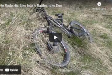 WATCH: Mountain Biker Accidentally Crashes Bike into Rattlesnake Den