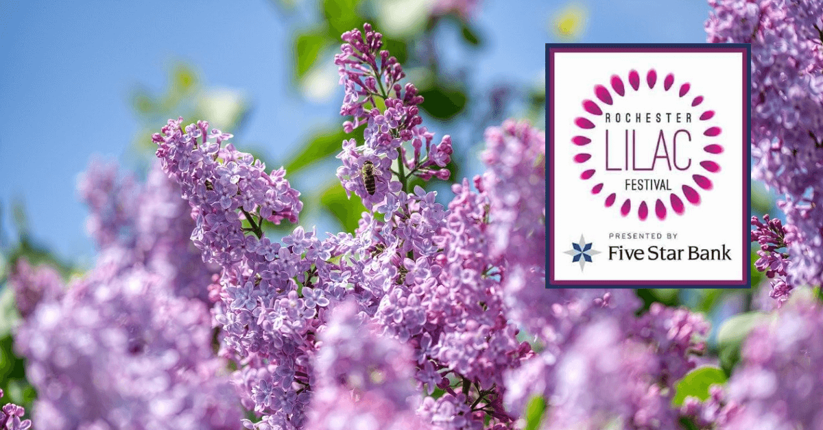 Fickle Feed: The 2021 Rochester Lilac Festival is Happening!